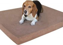 Best Small Dog Bed Reviews