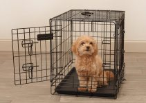 26 Best Small Dog Crates (Reviews Updated 2021)