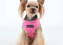 21 Best Small Dog Harnesses (Reviews Updated 2021)