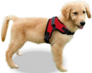 Copatchy No Pull Reflective Adjustable Small Dog Harness With Handle