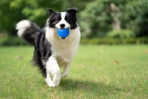 Dlder Indestructible Dog Balls