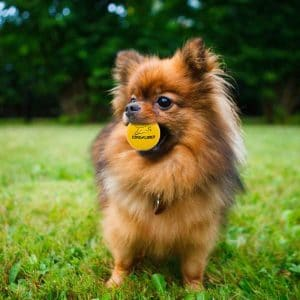 Expawlorer Indestructible Rubber Bouncy Ball