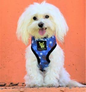 Ecobark Classic Dog Harness Soft Gentle No Pull