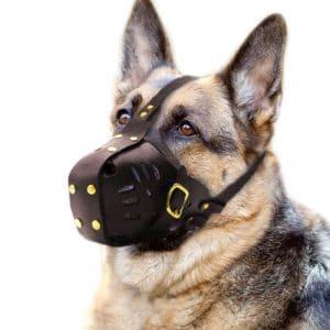 Pet Artist Genuine Leather Dog Muzzle