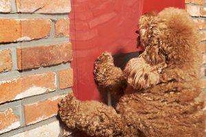 Pet Love J Heavy Duty Door Dog Scratch Protector