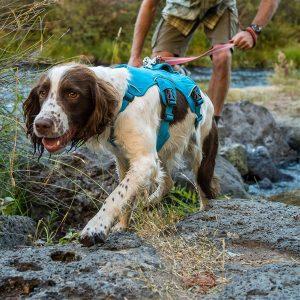 Ruffwear Web Master, Multi Use Support Large Dog Harness