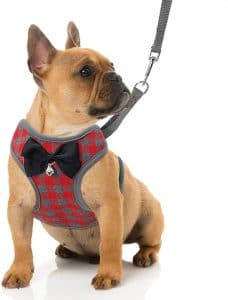 Rypet Small Dog Harness And Leash Set