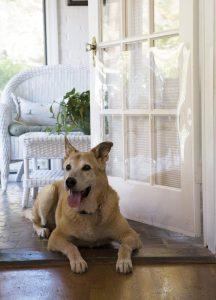 The Door Shield Pet Scratch Protector