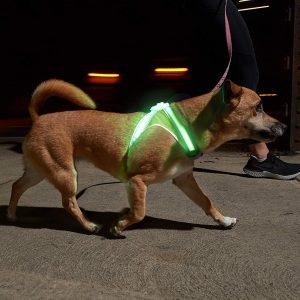 Noxgear Lighthound – Small Illuminated And Reflective Harness