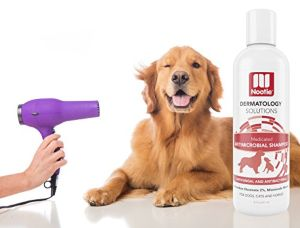 Best Antibacterial And Anti Fungal Dog Shampoo Review