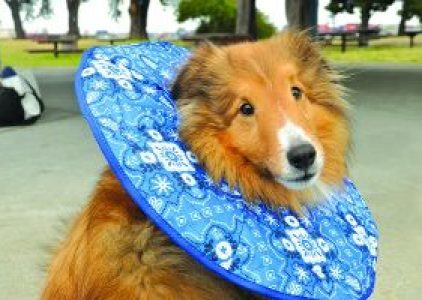 Best Dog Cone Alternatives Review