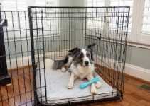 Best Dog Crate Bed Review