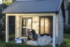 Best Dog Houses For Hot Weather Review