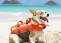 7 Best Dog Life Jackets (Reviews Updated 2021)