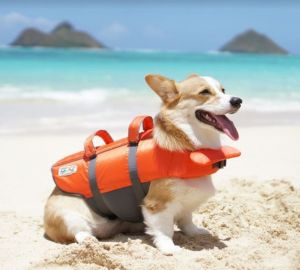 Best Dog Life Jackets Review