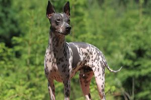 Best Hairless Dog Shampoo Review