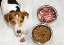 10 Best High Protein Dog Foods (Reviews Updated 2021)