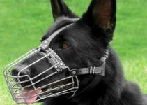 10 Best Muzzles for Pitbulls (Reviews Updated 2021)