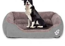 10 Best Orthopedic Beds for Large Dogs (Reviews Updated 2021)