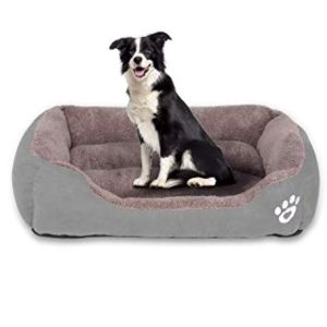 Best Orthopedic Bed For Large Dogs Review