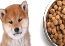 Best Shiba Inu Dog Food Review