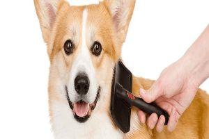 Best Soft Bristle Brush For Dogs