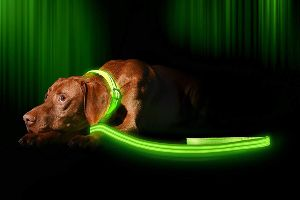 Illumiseen Led Dog Leash Usb Rechargeable Available In 6 Colors & 2 Sizes