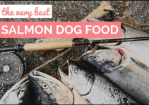 Best Salmon Dog Food Reviews