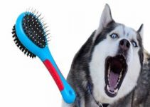 5 Best Brushes for Huskies (Reviews Updated 2021)