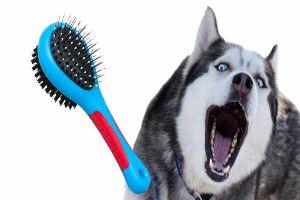 Best Brush For Huskies Review