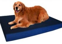 5 Best Outdoor Dog Beds (Reviews Updated 2021)