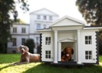 5 Best Outdoor Dog Houses (Reviews Updated 2021)