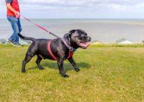 Best Retractable Dog Leash Review