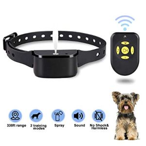 Best Bark Collar Review