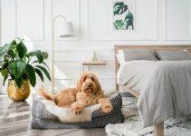 Best Dog Bed For Older Dog Review