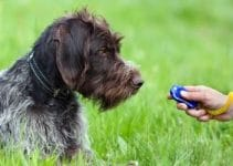 10 Best Dog Clickers (Reviews Updated 2021)