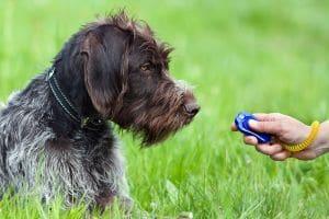 Best Dog Clicker Reviews