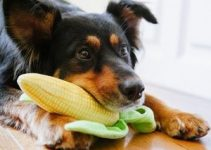 5 Best Dog Foods Without Corn, Wheat, or Soy (Reviews Updated 2021)