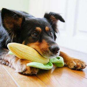 Best Dog Food Without Corn