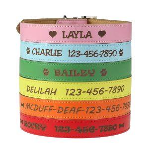 2. Custom Catch Personalized Dog Collar