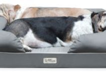 5 Best Dog Beds for Australian Shepherds (Reviews Updated 2021)