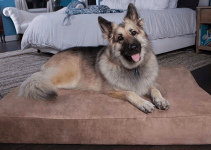 5 Best Dog Beds for German Shepherds (Reviews Updated 2021)