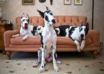 5 Best Dog Beds for Great Danes (Reviews Updated 2021)
