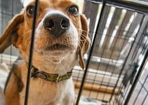 Best Dog Crate For Beagles Reviews
