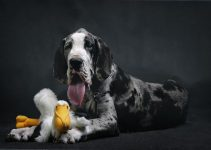 Best Dog Toys For Great Danes Review