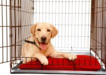 Best Stackable Dog Crates Review