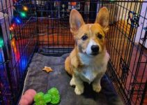 5 Best Dog Crates For Corgis (Reviews Updated 2021)
