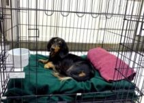 5 Best Dog Crates For Dachshunds (Reviews Updated 2021)