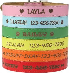 Custom Catch Personalized Dog Collar Engraved Soft Leather In Xs, Small, Medium Or Large Size, Id Collar, No Pet Tags Or Embroidered Names