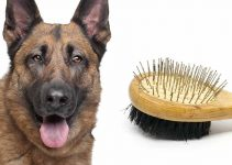5 Best Dog Brushes for German Shepherds (Reviews Updated 2021)